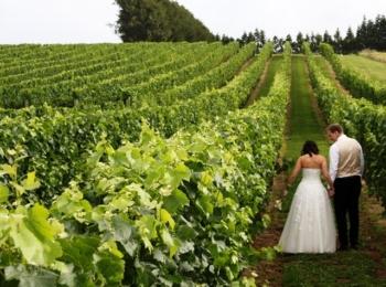 Soljans Estate Winery