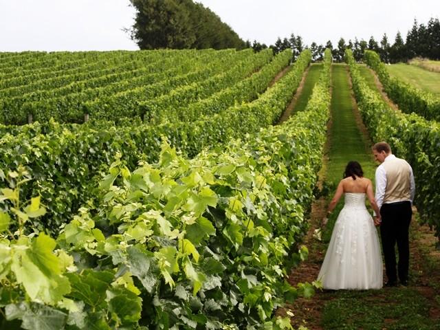 Soljans Estate Winery, Auckland